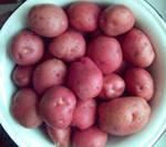 Отборный   картофель