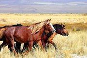 Продам лошадей в Павлодаре