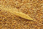 Продаем пшеницу 4 класс
